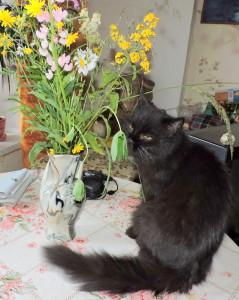 Кошка Кассандра и букет лесных цветов